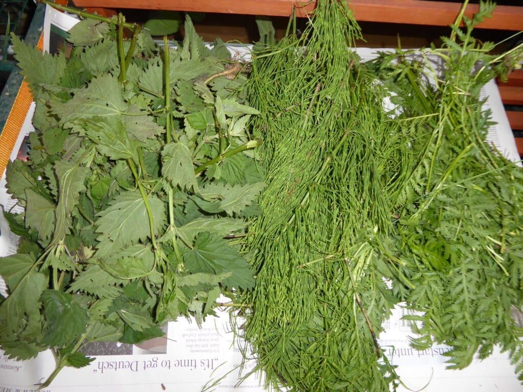 Diese Pflanzen Brennnessel, Ackerschachtelhalm und Rainfarn wirken gemeinsam oder einzeln gegen Schädlinge beim biologischen Gärtnern.