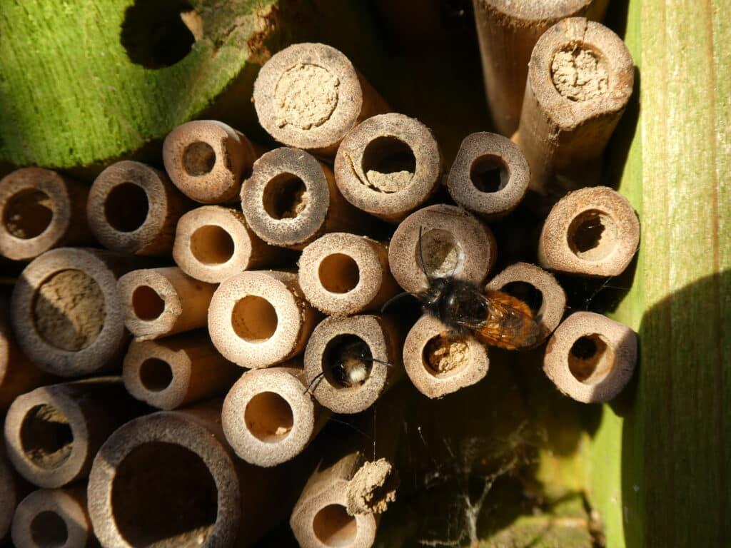 Auf jeden Balkon gehört eine Insektennisthilfe. Aber noch wichtiger ist Nahrung für die Wildbienen über einen langen Zeitraum.