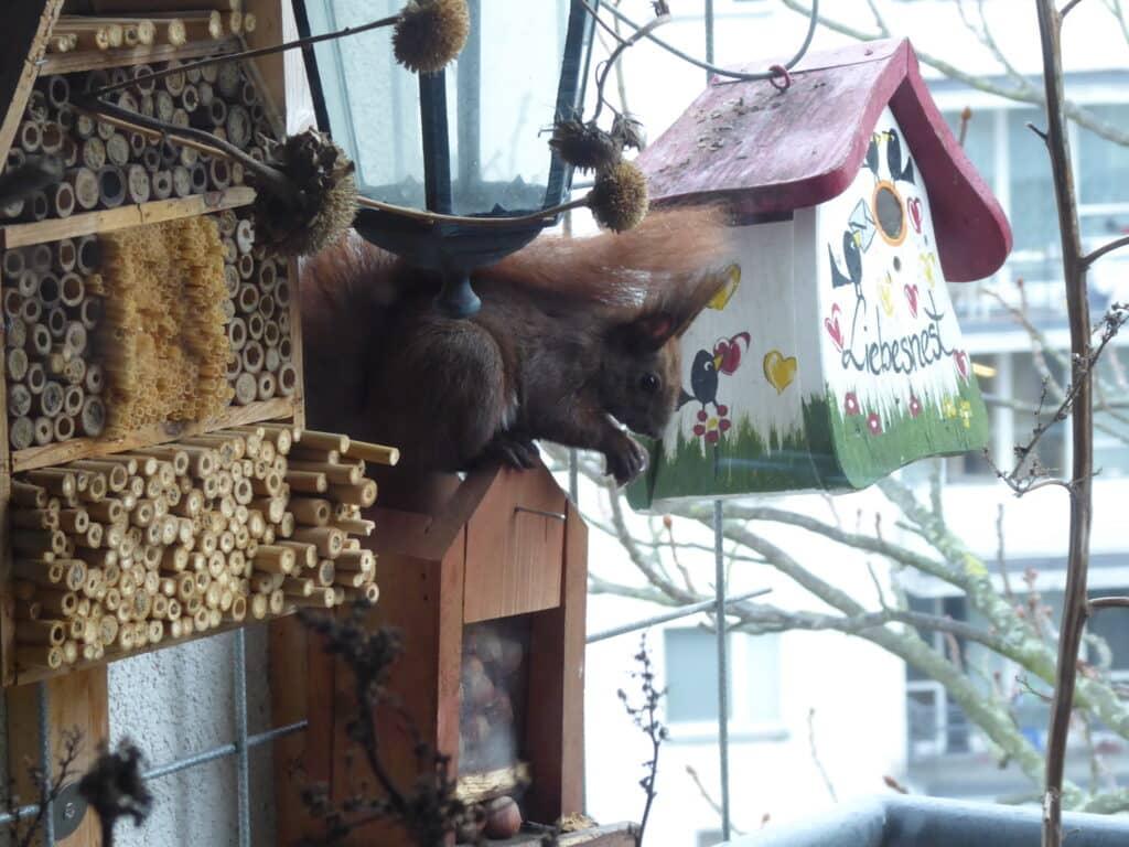 Zum Naturbalkon, zum Bio-Balkon gehören Insektennisthilfen. Die können natürlich auch selbst gebastelt werden.