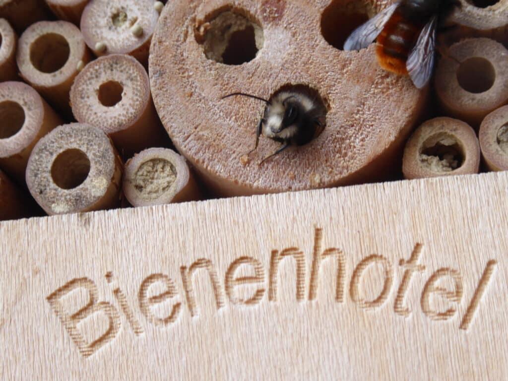 Bienenhotel ist kein guter Name. Insektennisthilfe passt besser.