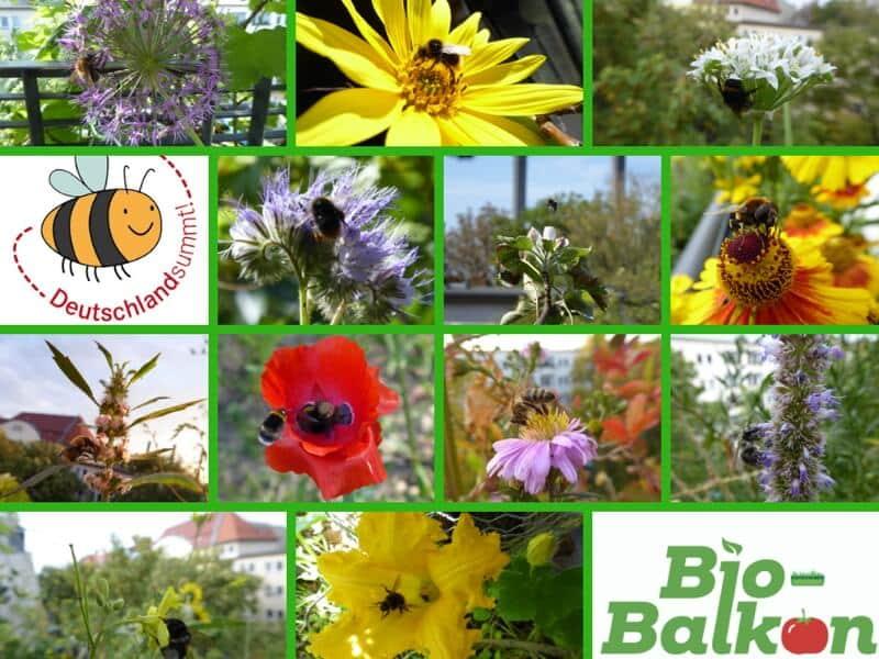 Bio-Balkon Kongress, Stadtgärtnern, Balkongärtnern, Balkongarten, Urban Gardening, Selbstversorgung, zurück zur Natur, Nachhaltigkeit, wir tun was für die Bienen, Deutschland summt, Wildpflanzen, einheimische Wildkräuter, Wildbiene, Wildbienen, Stadtwildtiere, Wildblumen, Wildblumenbalkon, Naschbalkon, Balkon, Wildpflanzenbalkon, Säulenobst, Effektive Mikroorganismen, Wildkräuter, Wildkräuter selbst anbauen, Wildkräuter vom Balkon, Online-Kongress, Onlinekongress, Balkonkongress, Bienenbalkon, Vogelbalkon, Vogelsterben, Insektensterben, Eichhörnchen Balkon