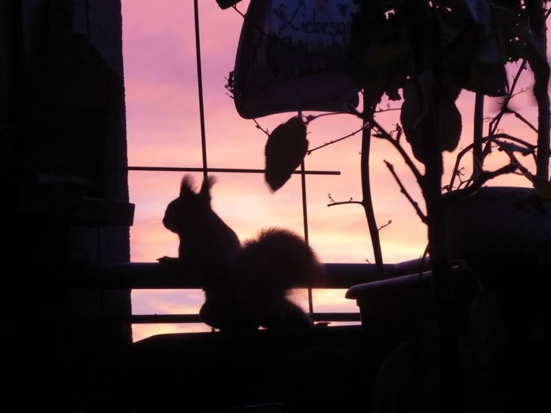 Eine wunderbare Stimmung: Das Eichhörnchen schaut bei Sonnenaufgang über die Balkonbrüstung. Der Himmel leuchtet blutrot.