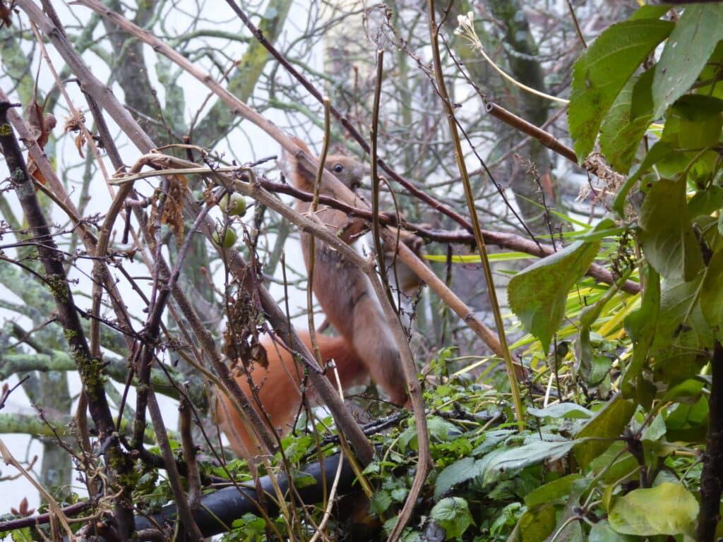 Eichhörnchen auf dem Balkon von so nah zu beobachten, ist eine riesige Freude.