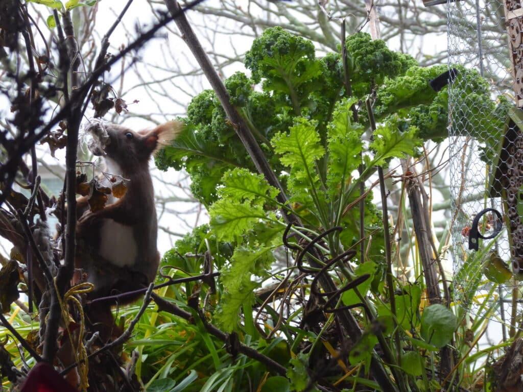 Herrlich, wie das Eichhörnchen auf dem Balkon mit der Schnur kämpft.
