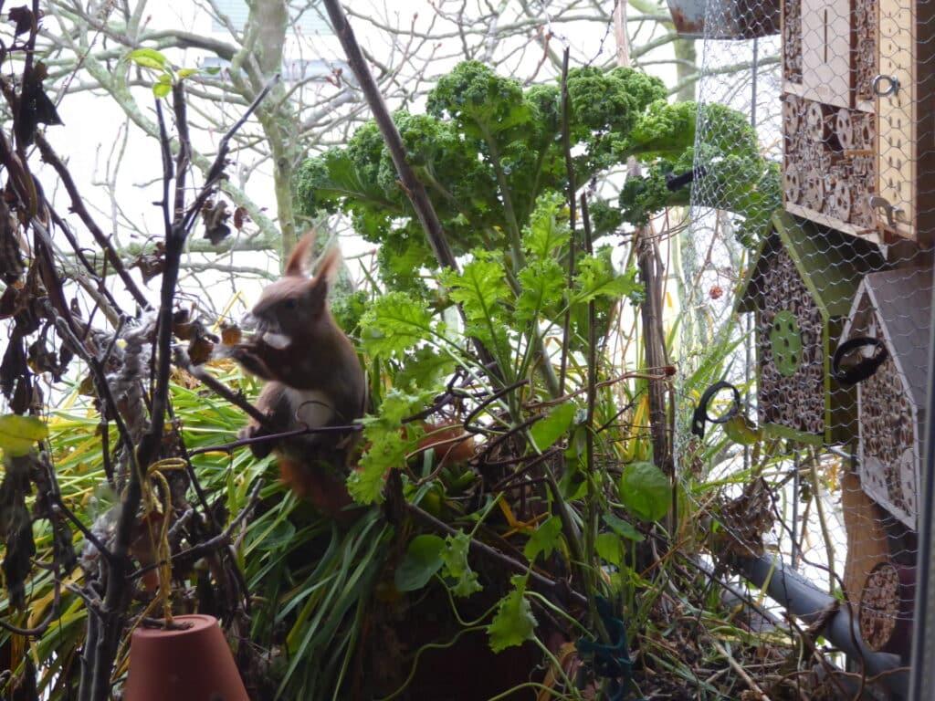 Ich stehe hinter der Fensterscheibe und beobachte das Eichhörnchen auf dem Balkon.