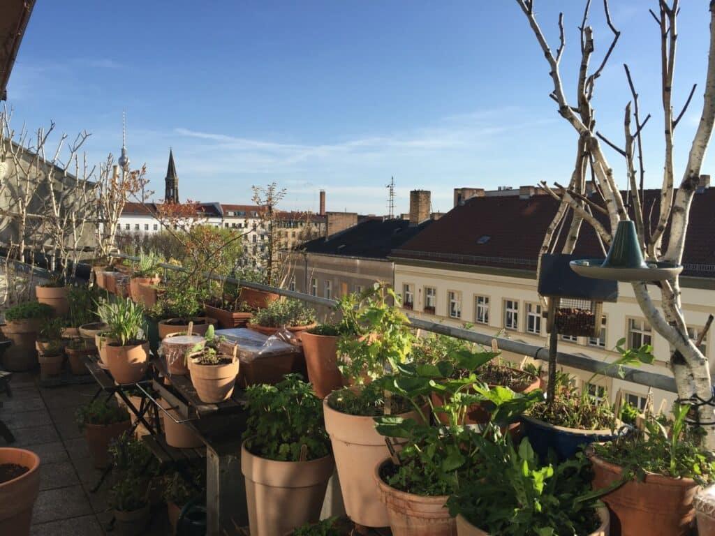 Tipps Balkon, pflegeleichten wunderschönen Tiere anziehenden Balkon, Balkon, Stadtbalkon, insektenfreundlicher Balkon, bienenfreundlicher Balkon, vogelbalkon, Stadtnatur, Balkon gestalten, Tipps Balkongestaltung, Südbalkon, südbalkon gestalten, Tipps Südbalkon, pflegeleichter Balkon, Balkon für Faule, mein Biotop auf dem Balkon, bio-balkon, balkon für faule, naschbalkon, mein biotop auf dem balkon, biotop, stadtbalkon, stadtgärtnern, balkongarten, nachhaltig gärtnern, balkongärtnern, balkongarteln, garteln, biogärtnern, biogarten, biogarteln, stadtnatur, natur in der stadt, vögel balkon, vogelbalkon, vogelbalkongarten