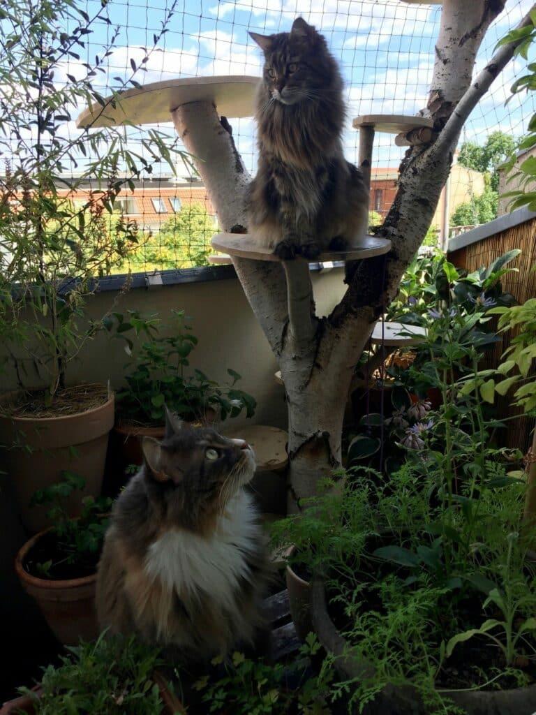 Katzenbalkon, Katze Balkon, Katze Balkongarten, Katze Balkongarten