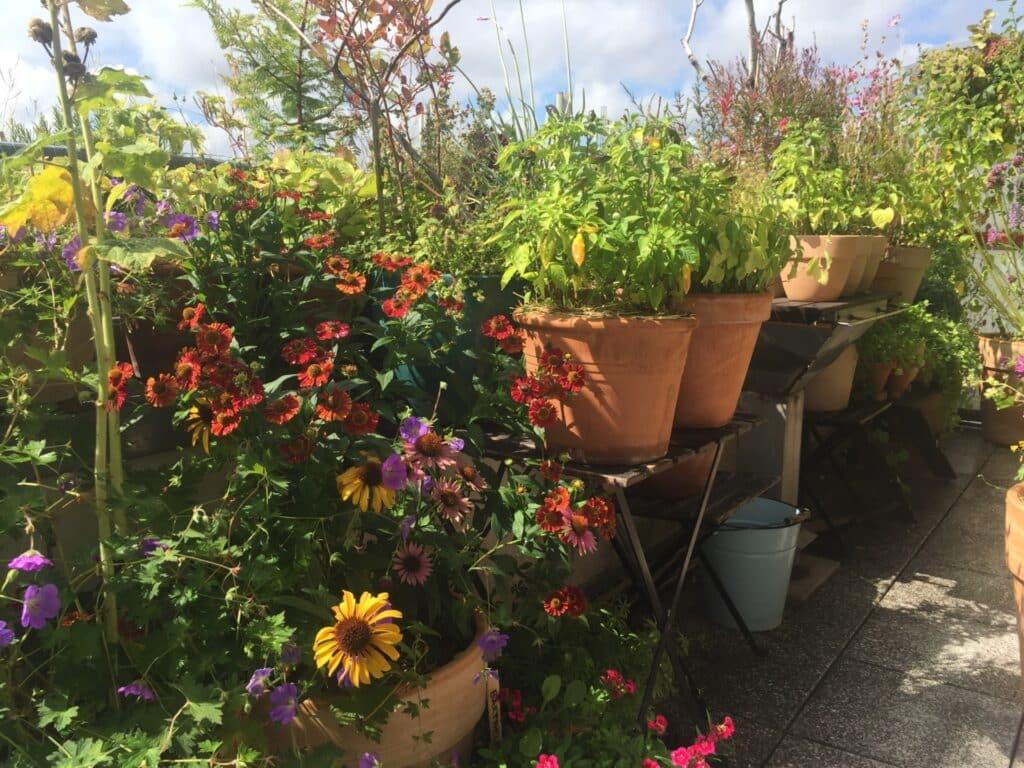 Tipps für einen wunderschönen, pflegeleichten Insekten und Tiere anziehenden Balkon, Pflanzgefäße Balkon, Pflanzgefäße Balkongarten