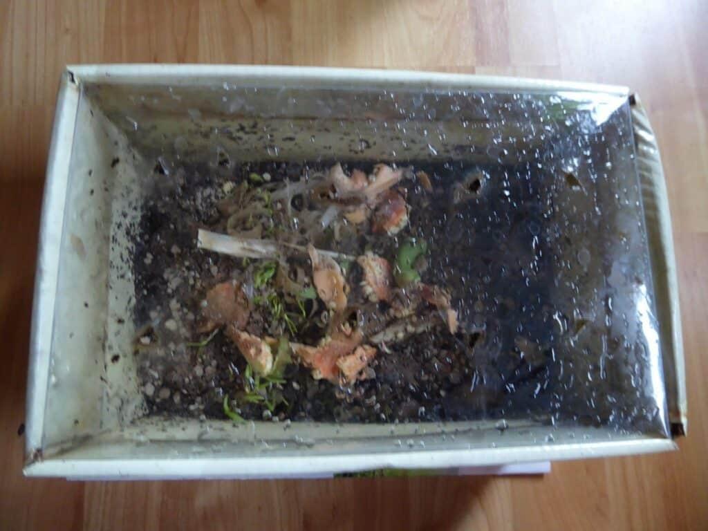 Die erste selbstgebaute Wurmkiste meines Sohnes. Er wollte auch Wurmkompostierung betreiben.
