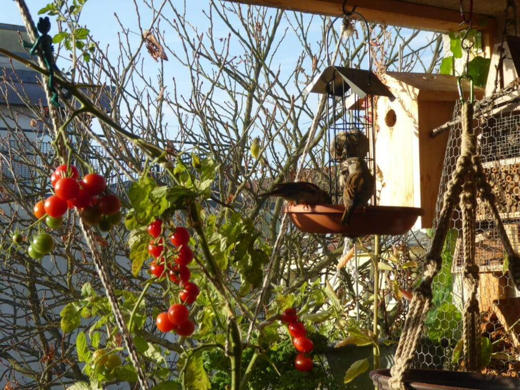 Vögel nehmen auf dem Balkon sehr gern die Futterstellen an. Ideal befüllt mit geschälten Sonnenblumenkernen, Meisenknödeln und einem Körnergemisch.