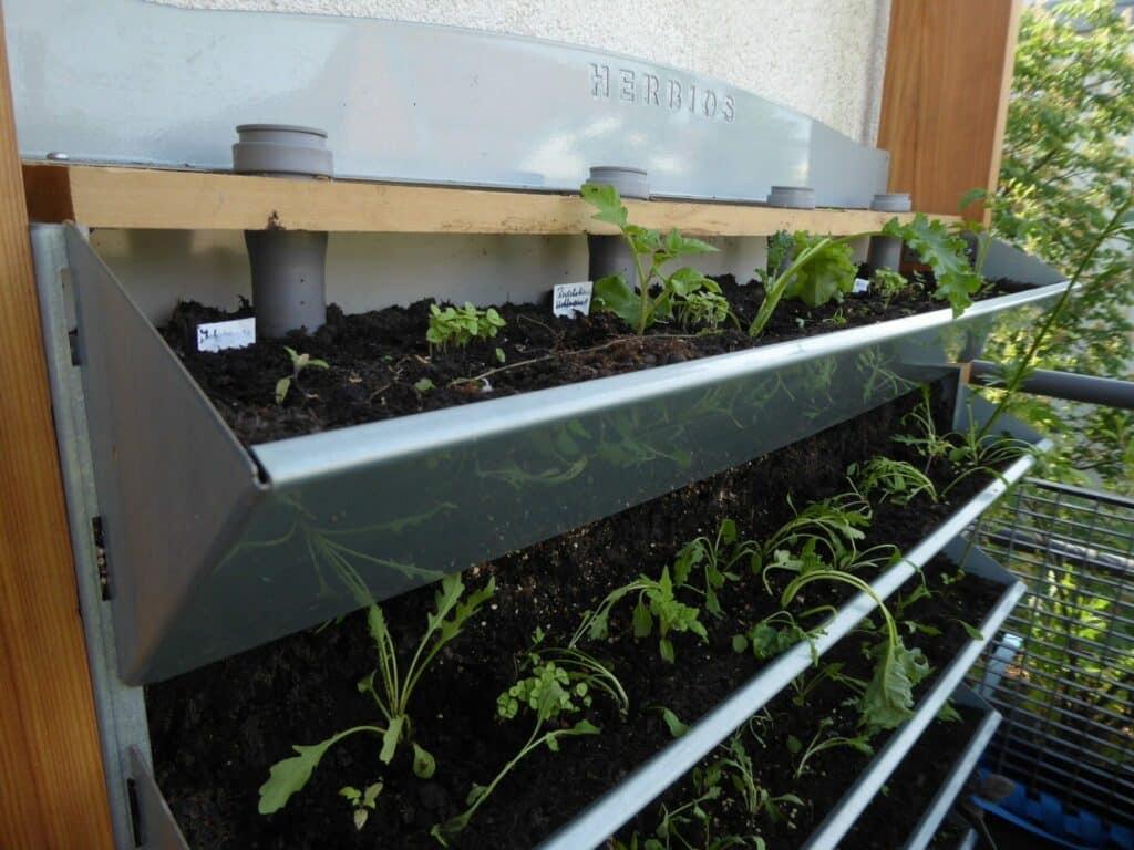 Einsetzen der Jungpflanzen in das Vertikalbeet. Noch lassen sie die Köpfe hängen.
