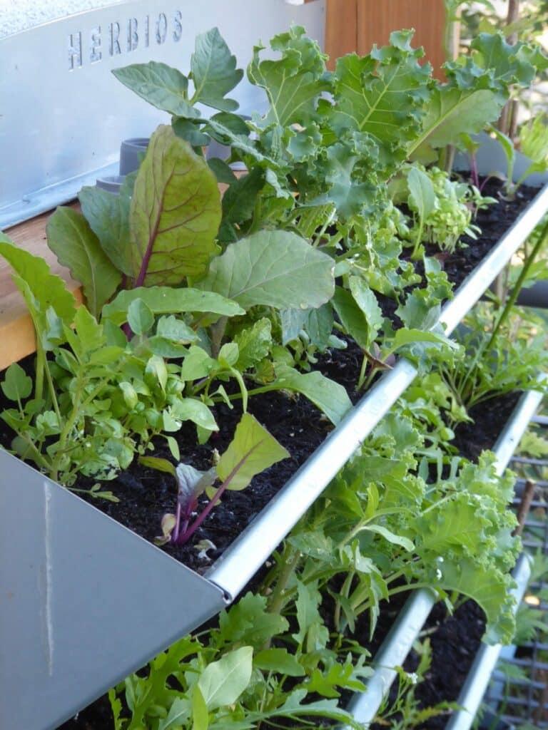Vertikales Gärtnern mit diesem Vertikalbeet ist ein Vergnügen. Es lässt sich prima bepflanzen.