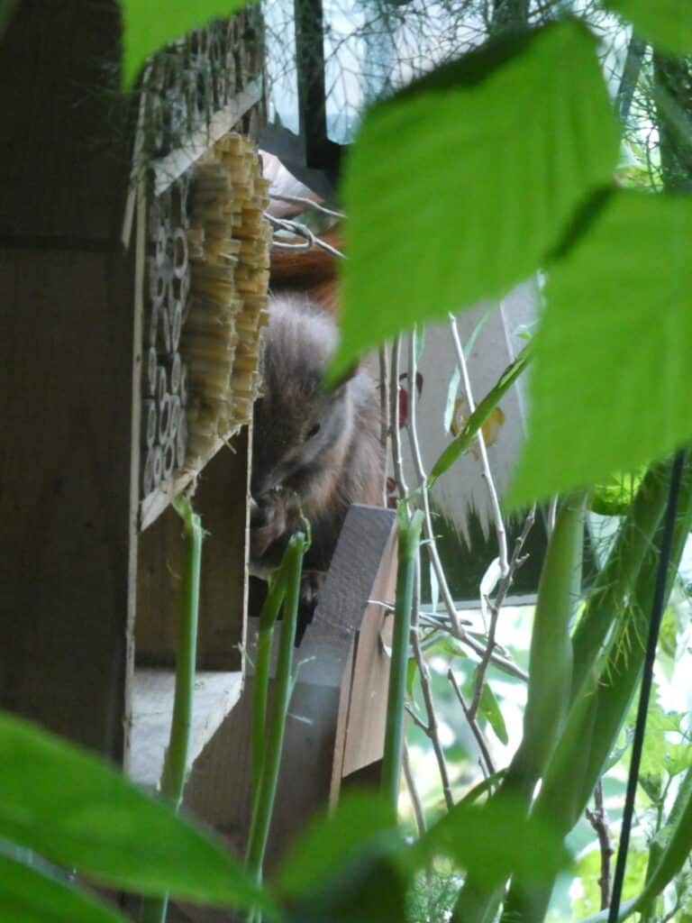 Balkon, Gärtnern Balkon, nachhaltiges Gärtnern, biologisches Gärtnern, Balkongarten, Gärtnern Balkongarten, ökologisches Gärtnern, Eichhörnchen, Eichhörnchen Balkon, Eichhörnchen Balkongarten, Eichhörnchen Garten, Biobalkon, Bio-Balkon, Natur mitten in der Stadt, Stadtnatur, Natur in der Stadt, Selbstversorgung Balkon, Selbstversorgung Balkongarten, Naturbalkon, Wildpflanzenbalkon, essbare Wildpflanzen, bienenfreundlich gärtnern, insektenfreundlich gärtnern, bienenfreundliche Pflanzen, insektenfreundliche Pflanzen, Vogel Balkon, Insekten Balkon, Natur Balkon, Natur Balkongarten, Biotop Balkon, Biotop Balkongarten, Vogelbalkon, Insektenbalkon, Naschbalkon, Fenchel Balkon, , was fressen Eichhörnchen, was fressen Eichkatzerl, was fressen Eichkater, Eichkatzerl Balkon, Eichkater Balkon