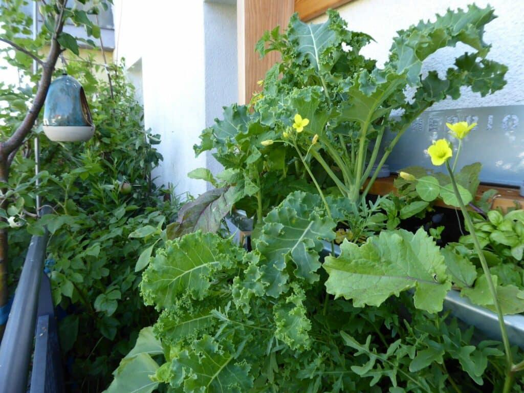 Mit diesem Vertikalbeet von HerbiosGarden ist vertikales Gärtnern auf kleinem Raum problemlos möglich. Du siehst es hier auf diesem Bild, wie schmal mein Naschbalkon ist.