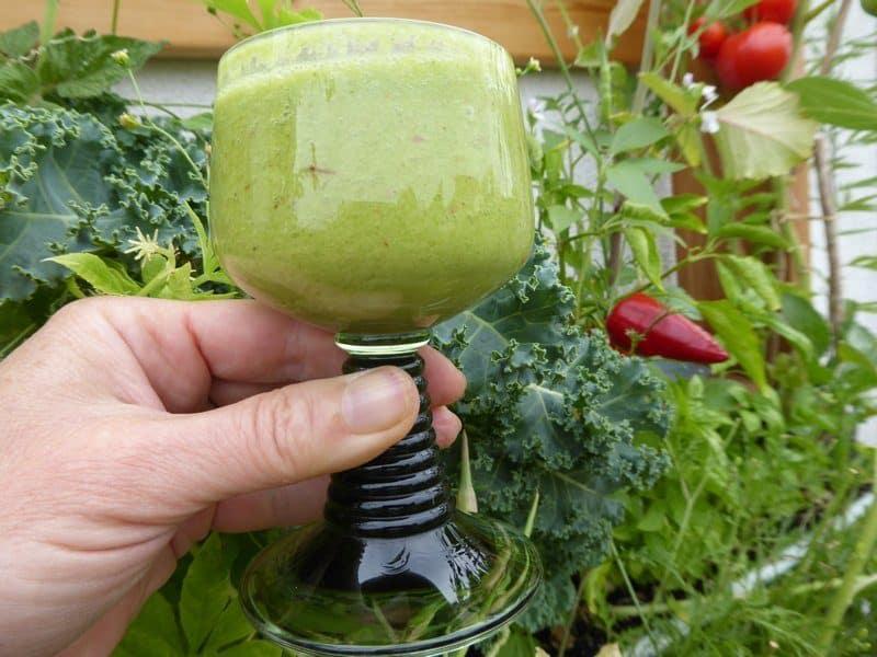 Grüner Smoothie mit Pflanzengrün aus dem Vertikalbeet