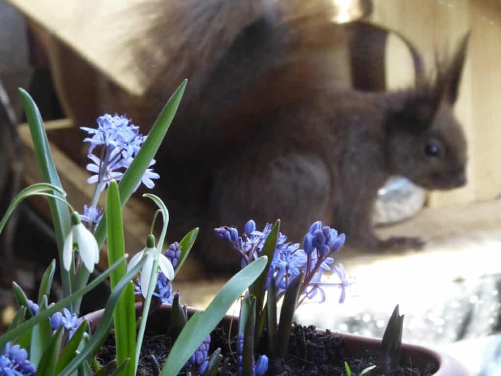 Pflanzzeit für Zwiebelblumen wie Krokus, Tulpe und Co. Hier findest Du Informationen zum Pflanzen von Frühblühern. Außerdem einen Gutschein Code für Rabatt für ökologische Blumenzwiebeln.