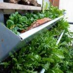 Ganzjährige Selbstversorgung mit Vertikalbeet: Feldsalat und Rucola.