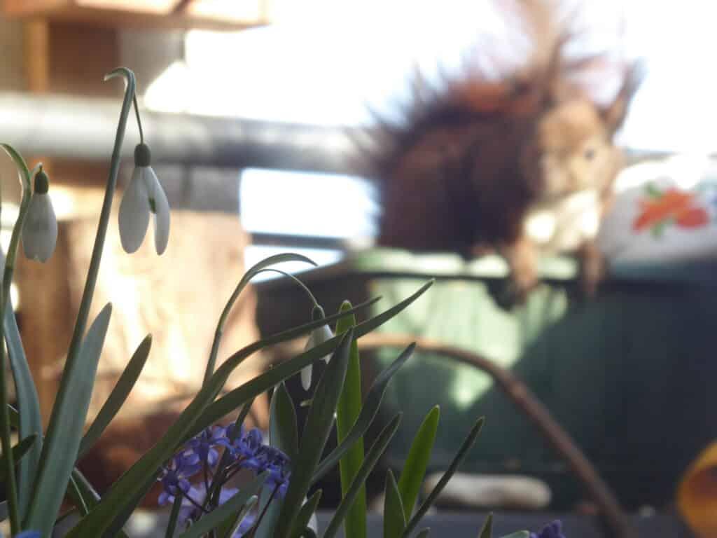 Mein Biotop auf dem Balkon. Pflanzzeit für Zwiebelblumen wie Schneeglöckchen, Krokus, Tulpe und Co. Sie gehören auf jeden Naturbalkon.