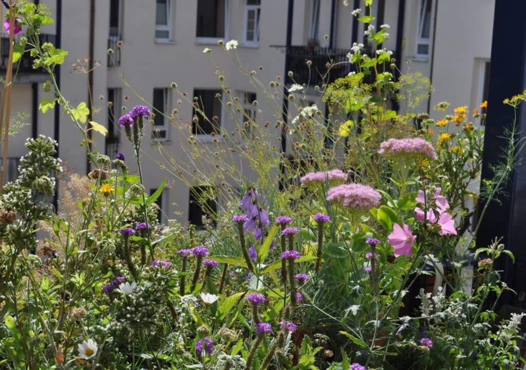Genauso noch im Spätsommer Es blüht immer noch sehr viel auf ihrem pflegeleichten schön blühenden bienenfreundlichen Balkon mitten in Hamburg.