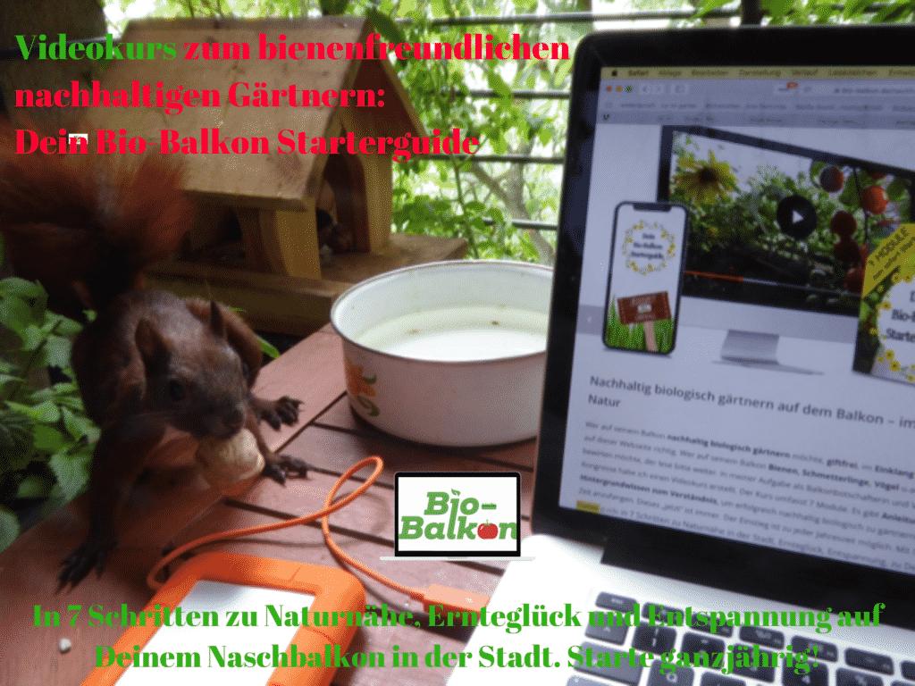 Mein Biotop auf dem Balkon - um dieses zu gestalten, habe ich einen Videokurs konzipiert. Mein Bio-Balkon Starterguide. In 7 Schritten zum nachhaltigen insektenfreundlichen Gärtnern.