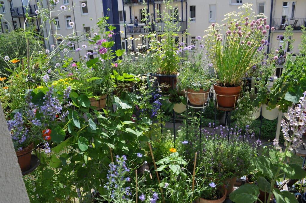 Am 17. Juni hat Stefanie auf ihrem Balkon mitten in Hamburg bereits 78 Kübel, Töpfe und Kästen. Eine Pracht ist ihr pflegeleichten schön blühenden bienenfreundlichen Balkon.