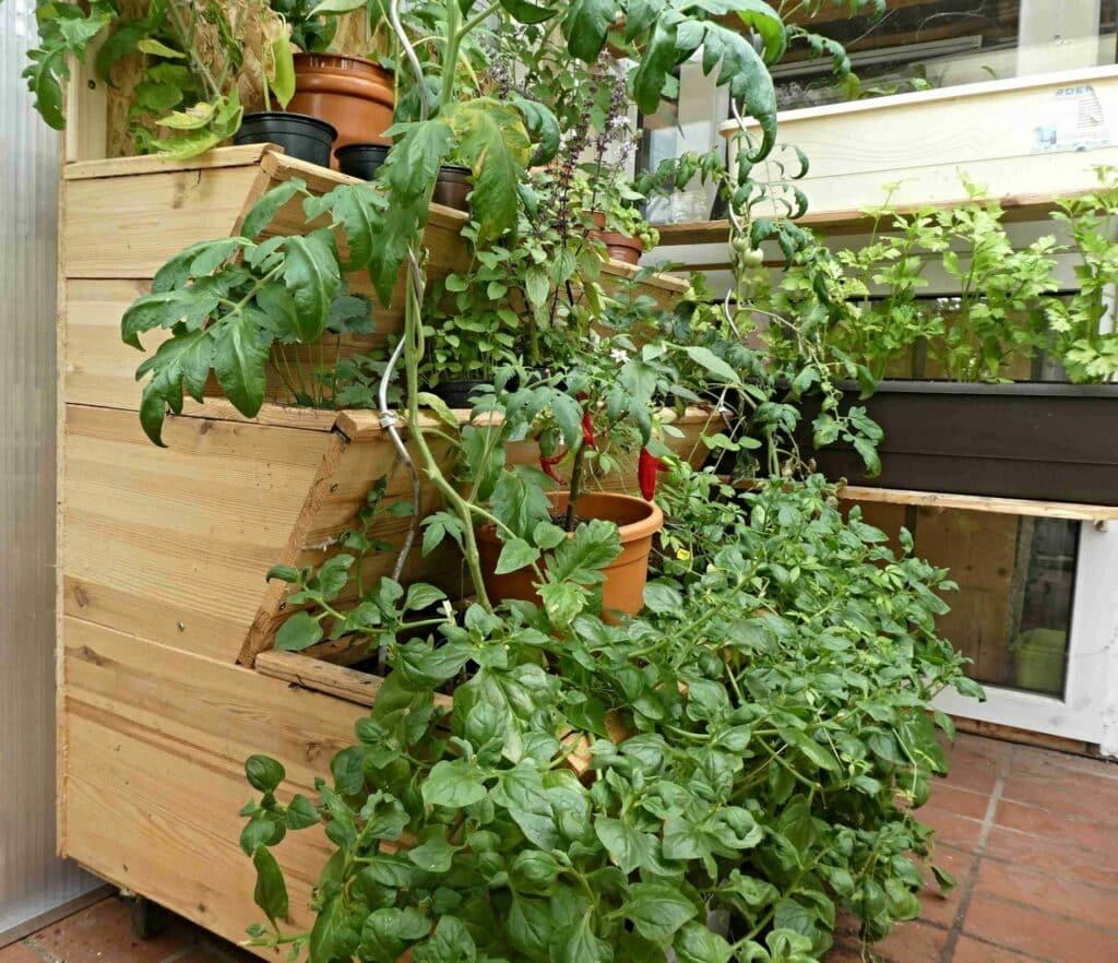 Dieses Vertikalbeet zum Vertikal Gärtnern auf Balkon und Terrasse baute ein Trinker von Grünen Smoothies. So versorgt er sich täglich mit dem wertvollen Pflanzengrün.
