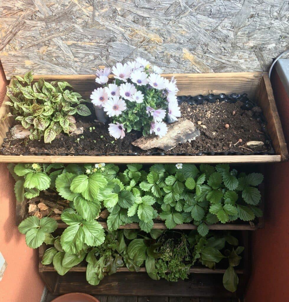 So geht Selbstversorgung in der Stadt, auf Balkon und Terrasse. Vertikal Gärtnern ist ein wichtiger Baustein für eine regionale, saisonale Versorgung mit frischen, gesunden Kräutern, Obst und Gemüse. Natürlich in Bio-Qualität.