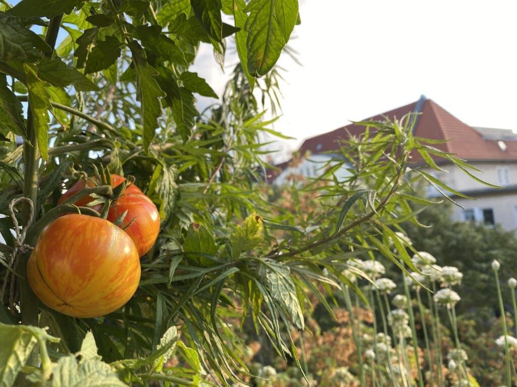 Balkon im September: September ist Erntezeit.