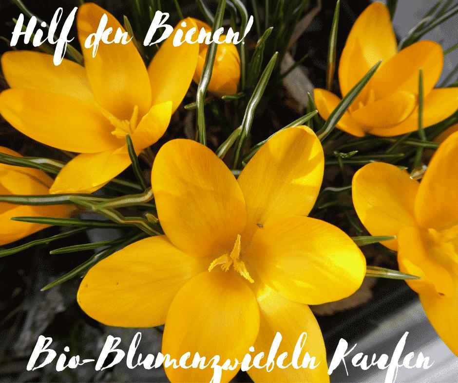Pflanzzeit für Zwiebelblumen. Hilf den Bienen: Bio-Blumenzwiebeln kaufen.