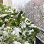 Ganzjährige Selbstversorgung mit Vertikalbeet: Mangold, Rucola, Grünkohl, essbare Wildpflanzen Löwenzahn, Vogelmiere und Beifuss.
