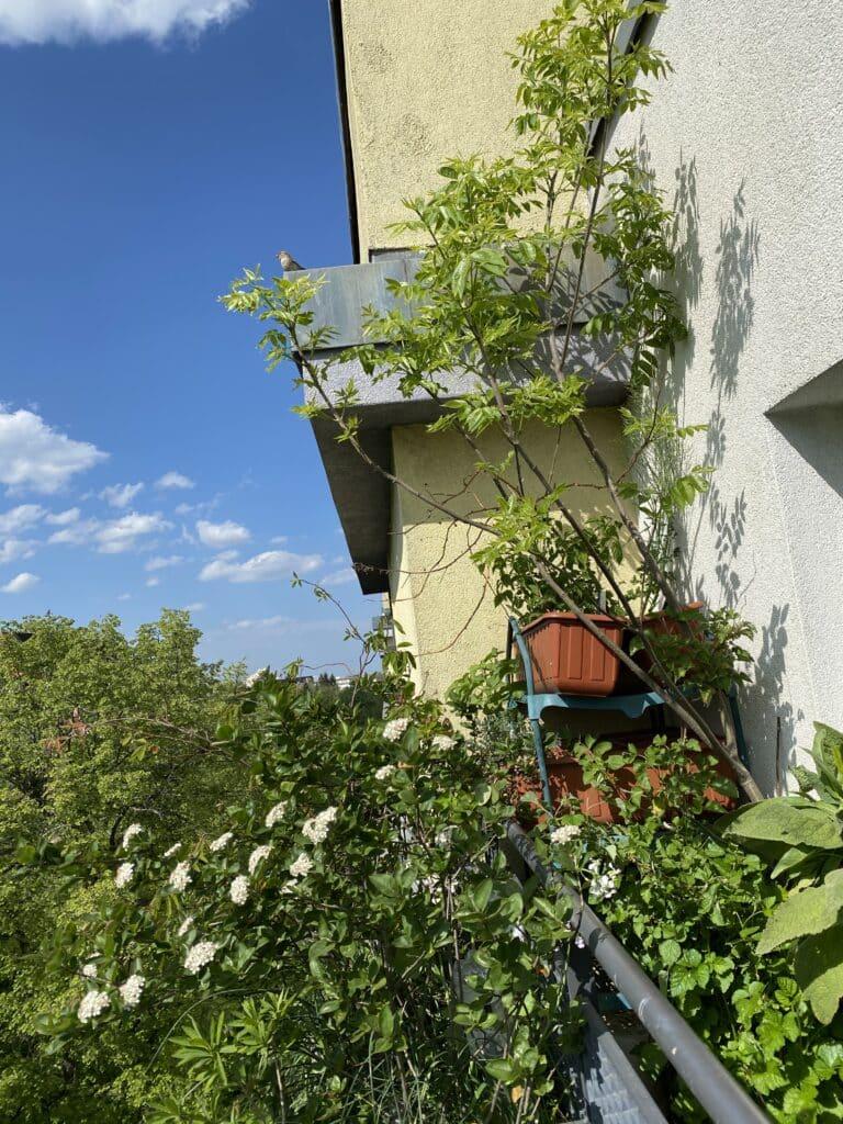 Ein naturnah gestalteter Balkon wird immer Vögel anziehen. Bäume, Sträucher, Beerenobst, Stauden sind mehrjährig und pflegeleicht.