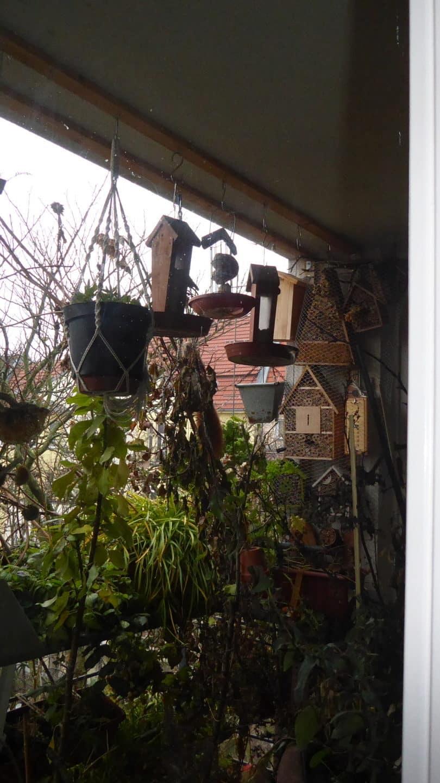 So fing der Bau des Kobels, der Schlafstelle an. Ich stand hinter der Scheibe der Balkontür und schaute hinaus auf den Balkon. Ein Eichhörnchen zerrte an der Schnur herum, an der die biologischen Tomaten wuchsen.