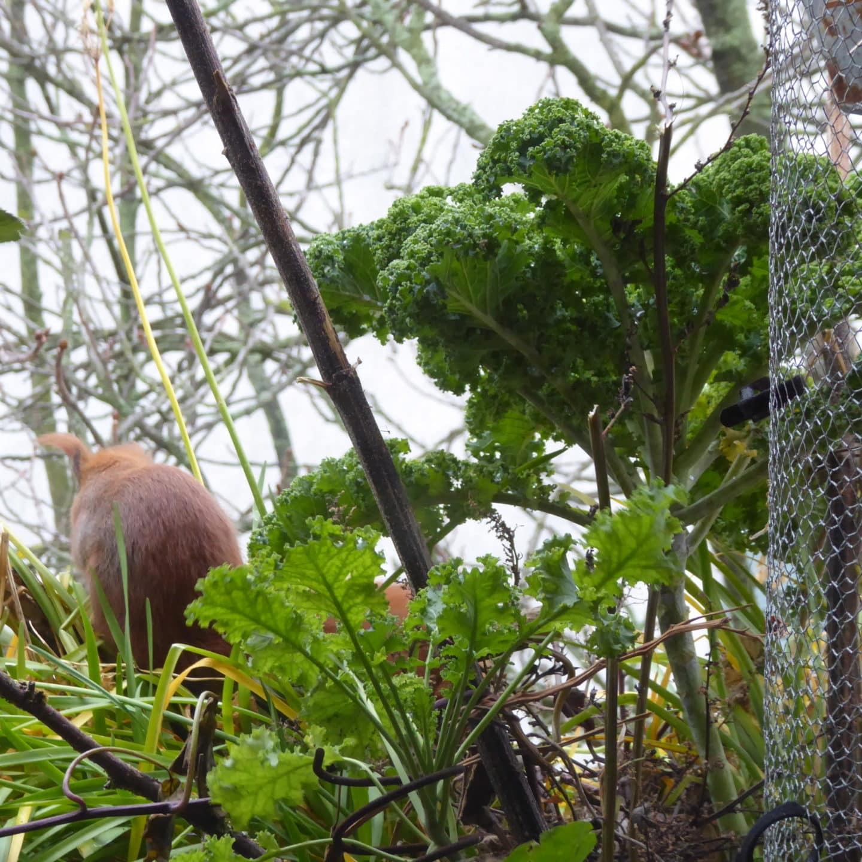 Das Eichhörnchen Ruth baut auf dem Balkon einen Kobel. Das ist eine Schlafstelle beziehungsweise ein Nest für Eichhörnchen.