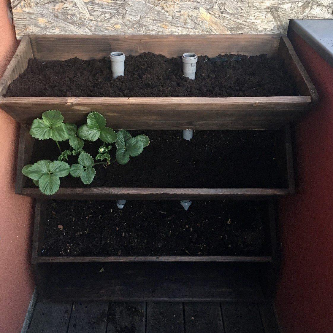 Nun wird das Vertikalbeet zum vertikal Gärtnern nach dem Selbstbau mit guter torffreier Bio-Gemüseerde befüllt und bepflanzt.