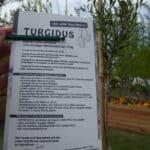 Für den Anbau von Goji-Beeren auf dem Balkon wird die Sorte Turdidus empfohlen.