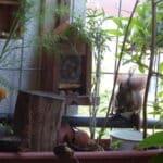 Auf dem Balkon ist der Anbau von Goji-Beeren möglich - im großen Pflanzgefäß.
