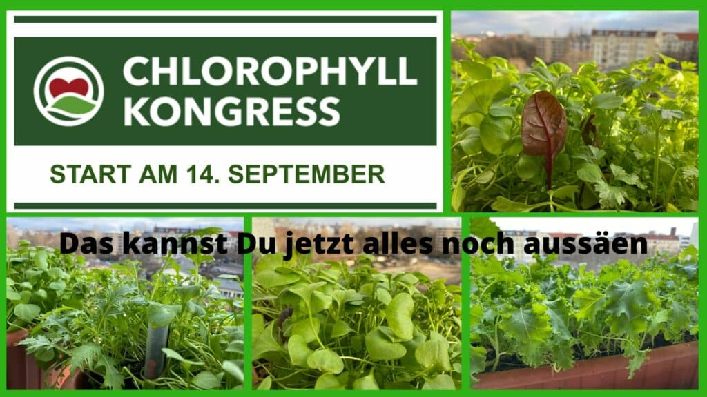 Diese Pflanzen sind chlorophyllhaltig und können jetzt noch ausgesät werden.